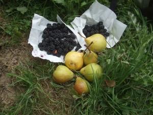 fruitsDSCF0102