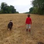 la-vie-avec-les-animaux